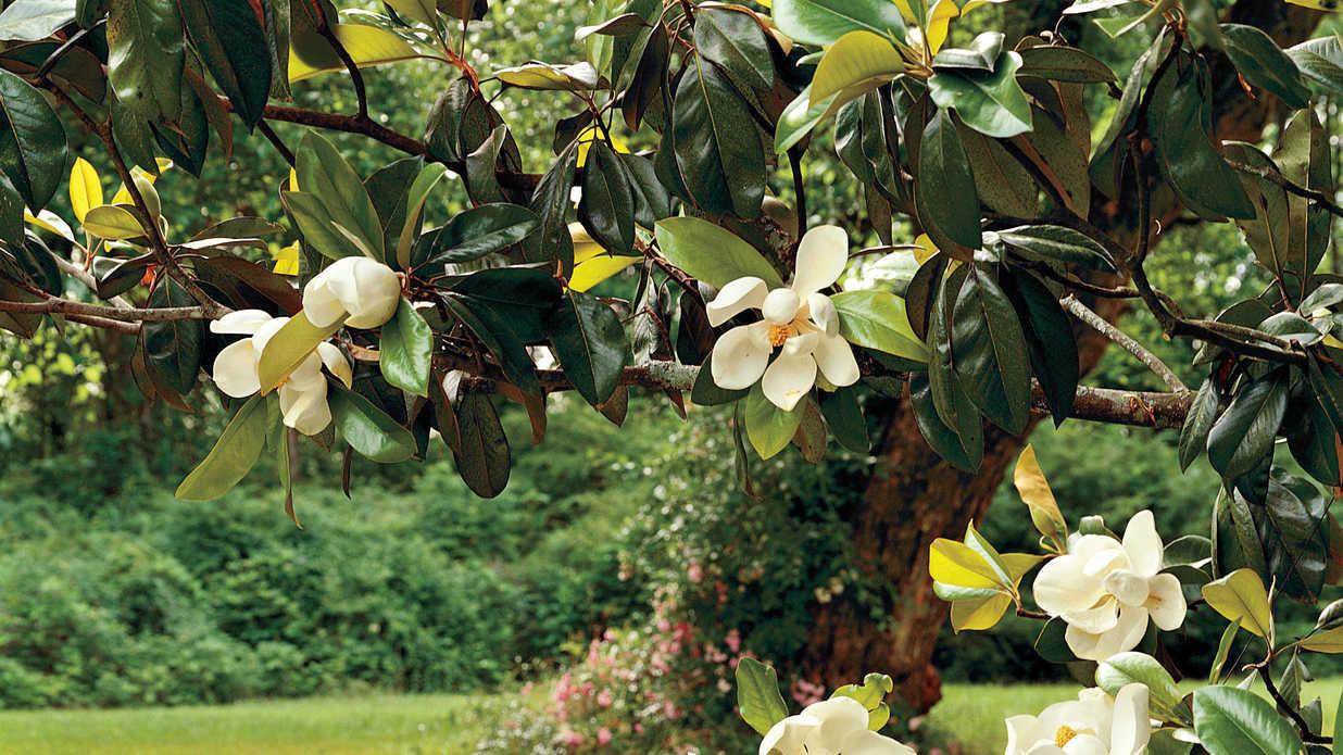 Magnolia Tree Private Act Sat And Psat Tutoring Magnolia Prep